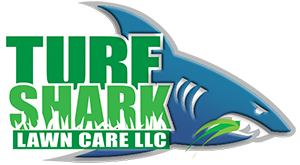 Turf Shark Lawn in Kansas City Logo